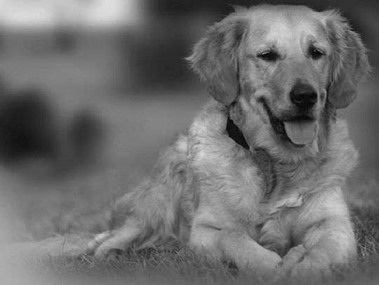 Elektronické ohradníky pro psy, neviditelné ploty pro psy