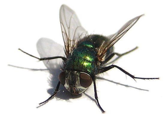 elektrické lapače hmyzu