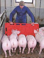 Zvukové poháněče a naháněcí desky pro prasata a další zvířata