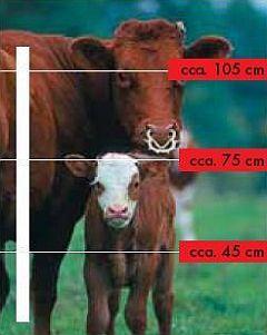 elektrické ohradníky pro krávy, býky, telata
