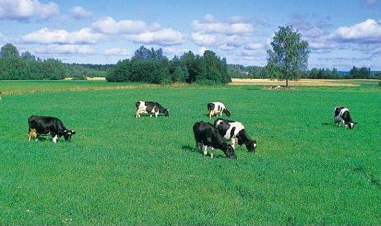 chovatelské potřeby pro dobytek, skot, krávy