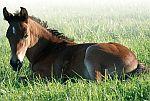 chovatelské potřeby pro koně