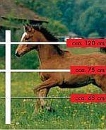 elektrické ohradníky pro hříbata, poníky a malé koně