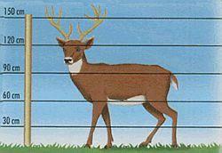 výška oplocovacích vodičů pro jeleny