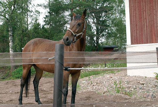 elektrický ohradník pro koně s extra širokou páskou