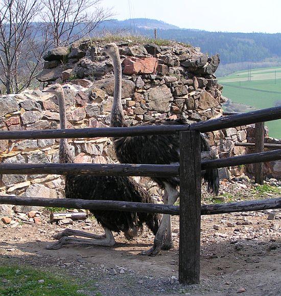 dřevěná ohrada pro pštrosy