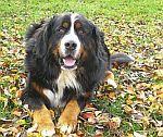 chovatelské potřeby pro psy