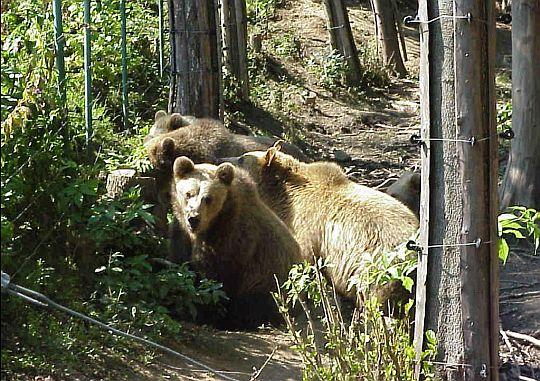 elektrické ohradníky pro medvědy