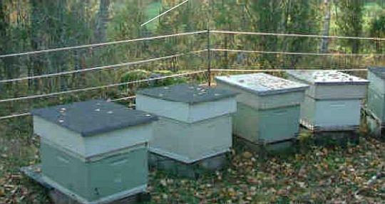 elektrické ohradníky na ochranu včelích úlů před medvědy