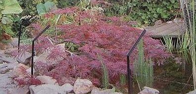zahradní jezírko s ochranou proti volavkám