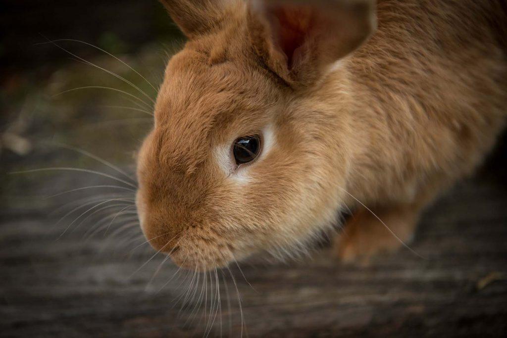 Elektrický ohradník pro králíky